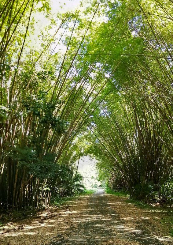 Bamboo Cathedral Trinidad